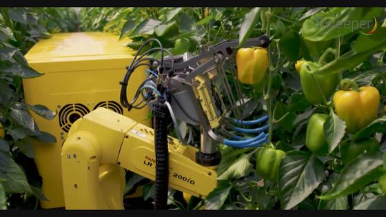 카메라로 촬영해 열매가 달린 가지만 잘라내는 파프리카 자동 수확 기계 [네덜란드 바헤닝헨대 Agro Food Robotics]