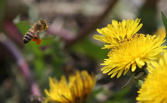 기후변화 탓 꽃가루 기간 늘고 알레르기 질환 증가