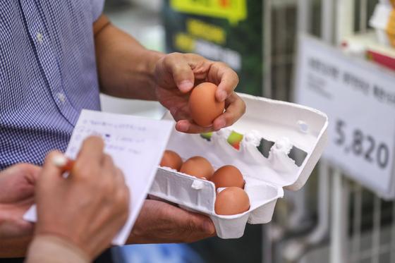서울시 직원들이 지난해 8월 서울시내 한 대형마트에서 달걀 살충제 검사를 위해 달걀을 무작위 수거하고 있다. [뉴스1]