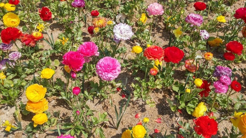 꽃을 좋아하는 여성 D씨가 찍은 사진. 그는 친구들과 벚꽃길을 걷고 싶다고 했다.