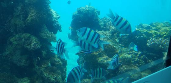 홍해 리조트 도시인 에일라트의 수중 전망대. 채인택 기자