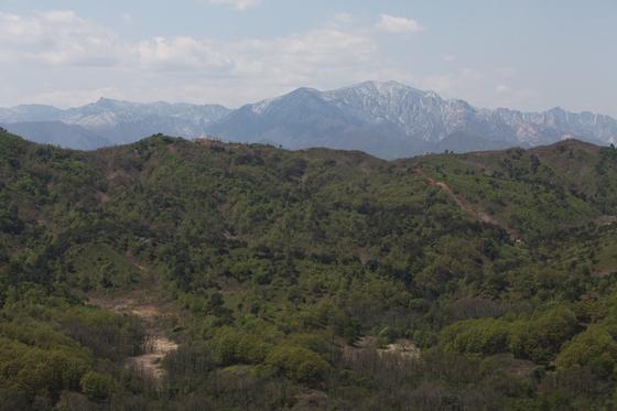 금강산전망대에서 본 북한. 신록 우거진 숲과 멀리 눈 덮인 금강산 채하봉이 한눈에 담겼다. 최승표 기자