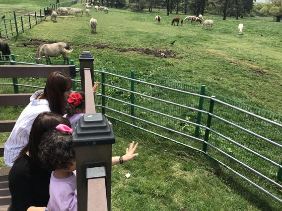 지난 25일 제주 마방목지를 찾은 관광객들이 펜스안 말들에게 손인사를 하고 있다. 최충일 기자