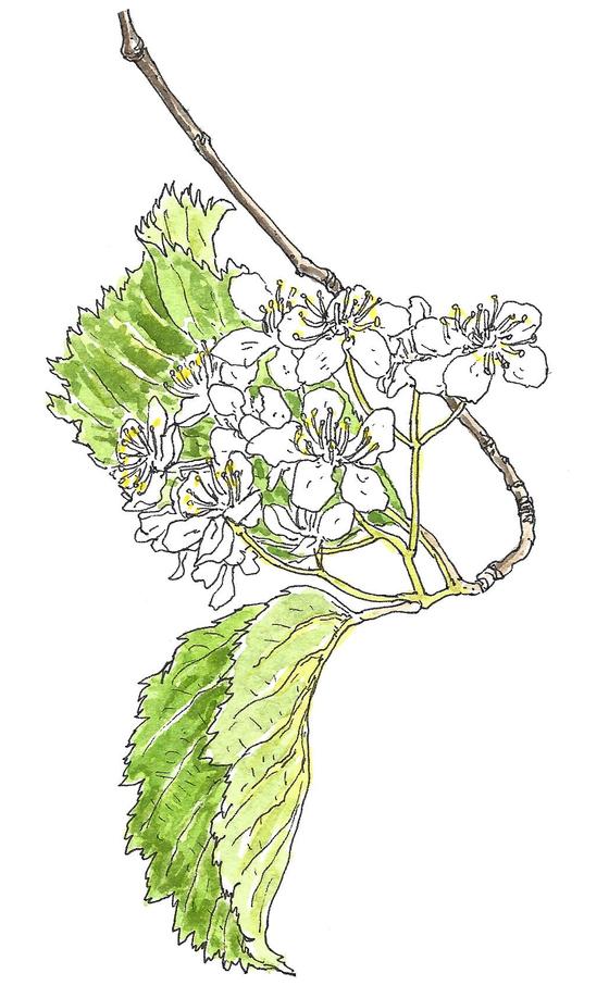 [소년중앙] 황경택 쌤과 자연이랑 놀자 14.봄꽃