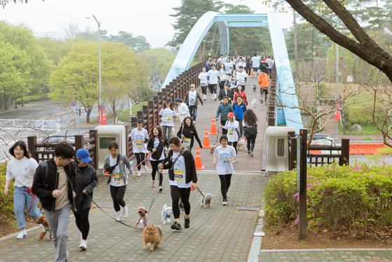 댕댕런에 참가한 개들이 반려인과 함께 달리는 모습이 장관이다.