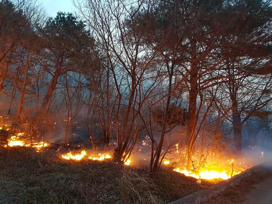 강원도 강릉시 옥계면 남양리에서 발생한 산불이 인근 마을로 번지고 있다. [사진 독자제공]