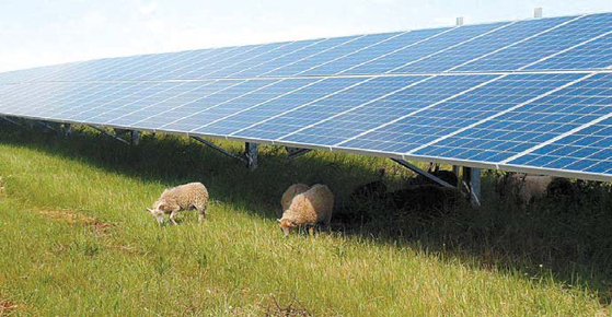 한화큐셀은 지난해 말 기준 총 8GW의 셀과 모듈 생산능력을 각각 보유하고 있다. 셀 기준으로 세계 1위 규모다. 사진은 독일 작센안할트 주에 설치한 태양광발전소 전경. [사진 한화그룹]