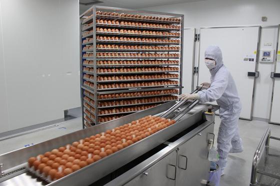 독감 바이러스를 키우는 숙주 역할을 할 계란이 접종기 안으로 들어가고 있다.     [사진 GC녹십자]