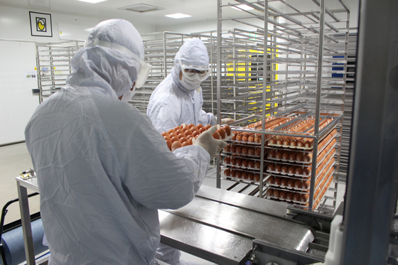지난달 30일 GC녹십자 화순공장 직원들이 독감 바이러스를 주입한 계란을 바이러스를 배양하는 장치에 넣고 있다. [사진 GC녹십자]