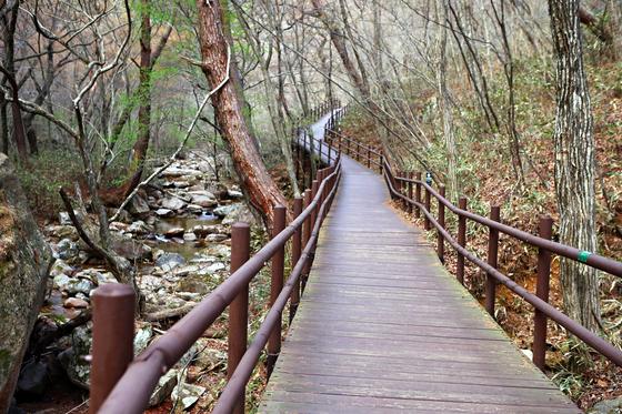 법주사에는 걷기 편한 길 오리숲길과 세조길이 있다. [사진 한국관광공사]