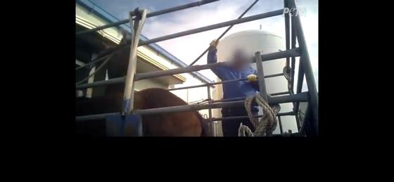 페타가 제공한 말 학대 동영상속에서 한 인부가 말을 때리고 있다. [페타 유튜브 캡쳐]