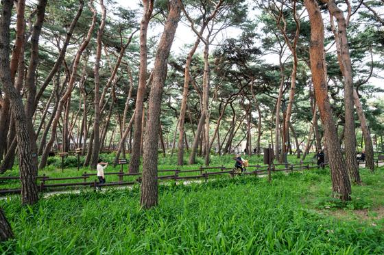 서울에는 동네 주민만 아는 근사한 공원이 제법 많다. 사진은 강북구 우이동에 있는 강북 솔밭근린공원.[사진 서울관광재단]