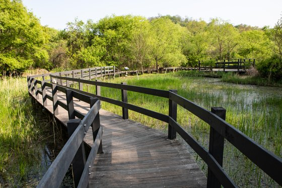 길동생태공원은 생물 서식 환경 보호를 위해 하루에 예약자 400명만 받는다. [사진 서울관광재단]