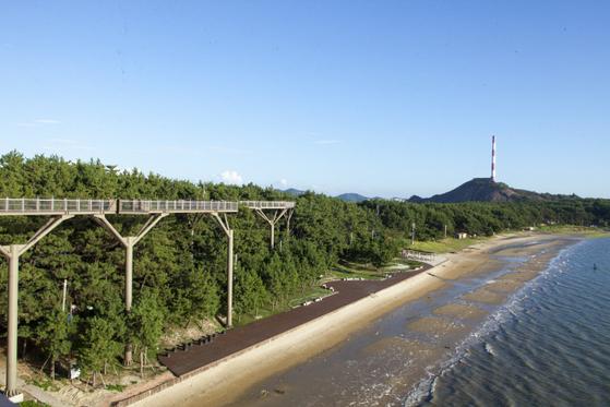 충남 서천군 장항읍 송림리 해변에 설치된 스카이워크. 멀리 군산쪽으로 옛 장항제련소 굴뚝이 보인다. 이곳은 연간 30만명이 찾는 관광명소로 자리잡았다. [사진 서천군]