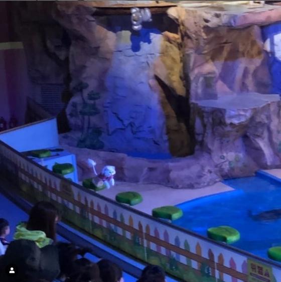 14일 인스타그램에 올라온 어린이대공원 동물 공연 사진. [사진 @cats_on_sofa2 인스타그램 캡처]