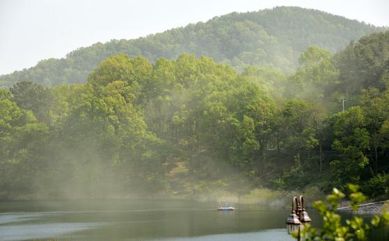 무더운 날씨를 보인 14일 오후 대청호 소나무숲에 송홧가루 등 뿌연 꽃가루가 날리고 있다.김성태 기자