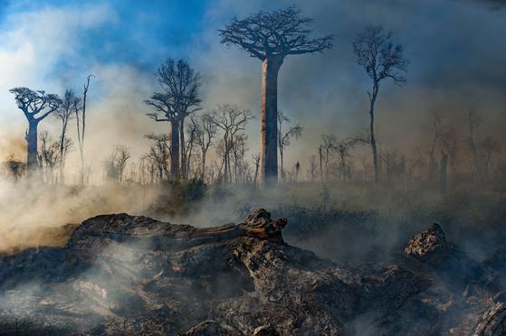 마다가스카르 섬. [사진 넷플릭스]