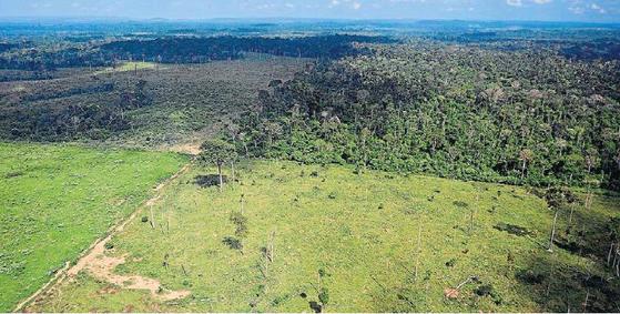 불법벌목 등으로 아마존 열대우림 파괴가 빠르게 진행되는 것으로 나타났다. [브라질 일간 에스타두 지 상파울루=연합뉴스]