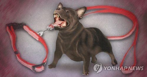 목줄 없는 맹견 이미지. [연합뉴스]