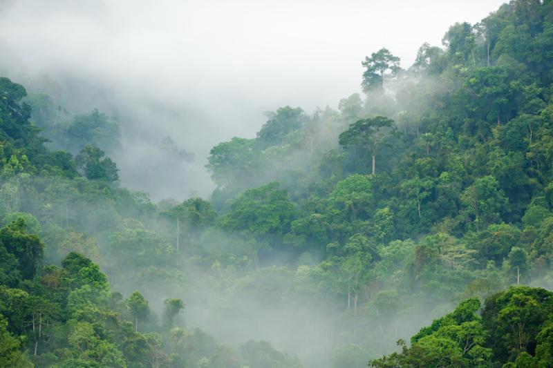 나무가 울창하게 들어선 아프리카 열대우림의 모습. [중앙포토]