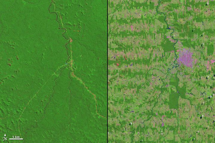 브라질 론도니아 지역에서 진행된 열대우림 벌목. 벌목 전(왼쪽)과 벌목 후. [중앙포토]