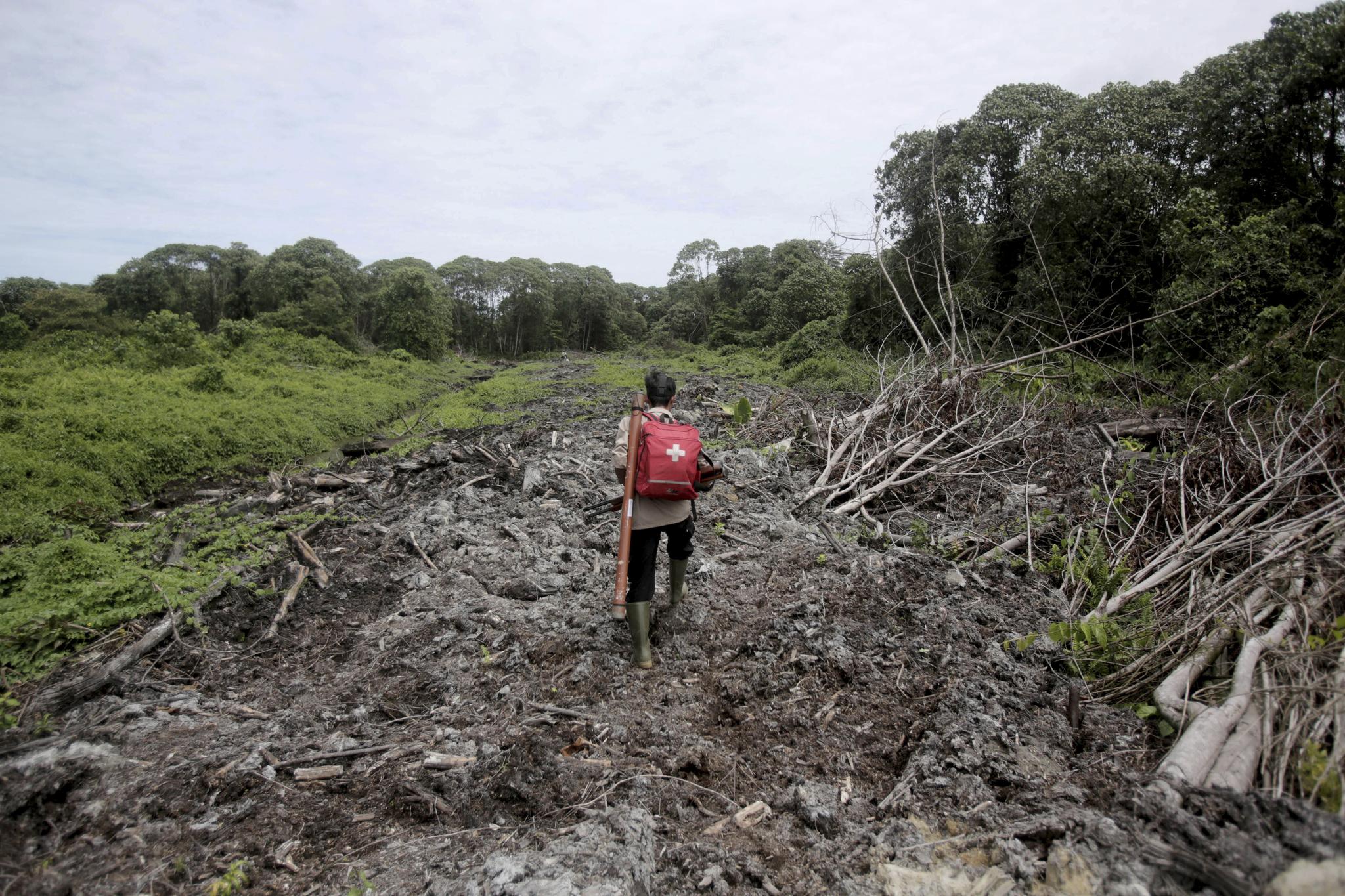 인도네시아 아체 지역에서 환경활동가가 오랑우탄 구조를 위해 의약품이 든 배낭을 지고 벌목된 숲을 지나고 있다. 바닥에 이탄층이 쌓인 이 지역은 팜유 플랜테이션 조성을 위해 벌목을 했다. [AP=연합]