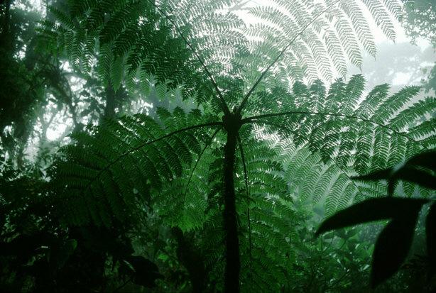 일부 학자들은 나무가 온실가스를 배출하기 때문에 나무를 심는 것이 지구온난화를 막는 데 도움이 되지 않는다고 주장하기도 한다. 사진은 아마존 열대우림의 모습.[중앙포토]