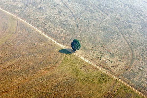 파괴된 브라질 열대우림. [중앙포토]