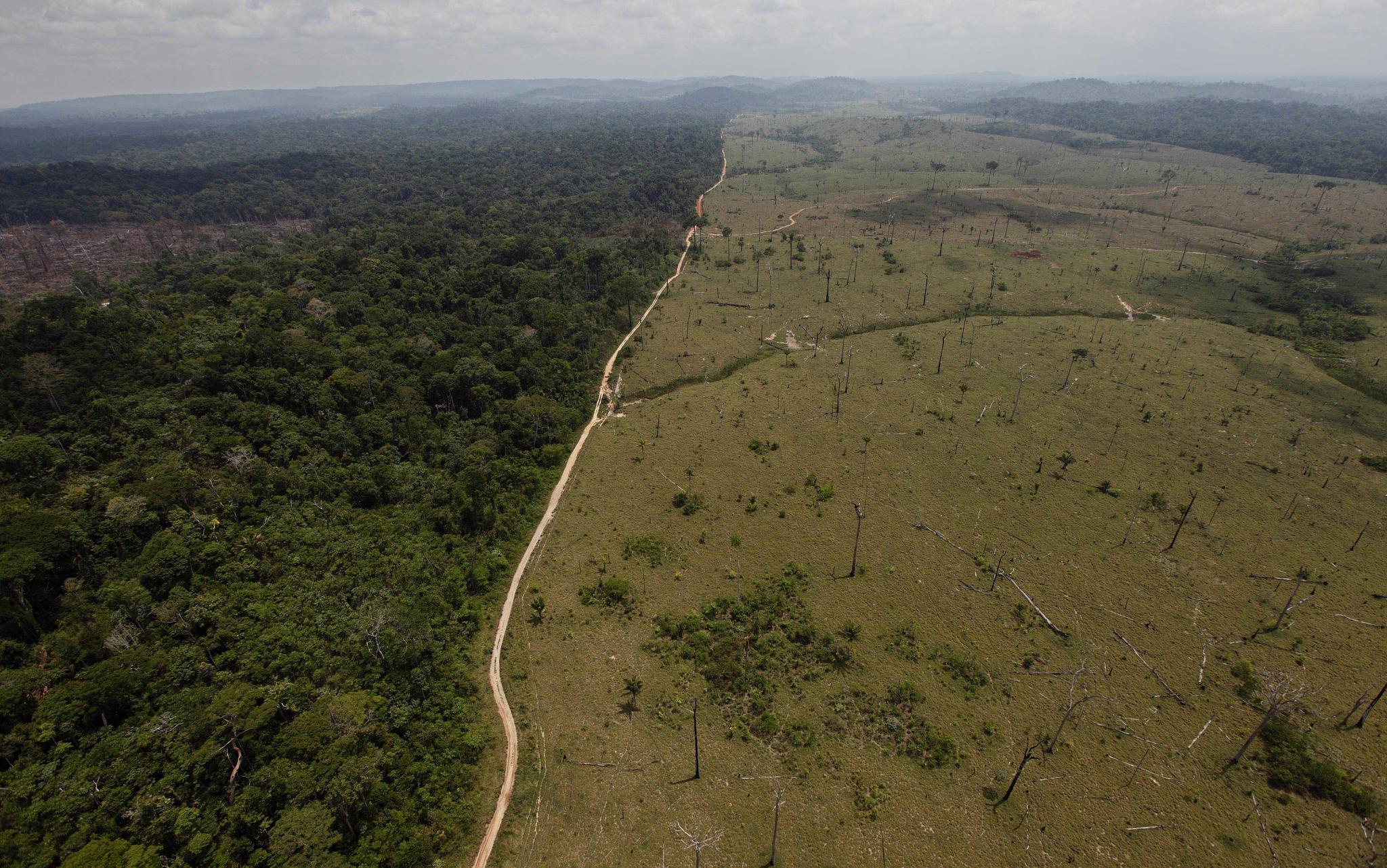 브라질의 아마존 열대우림 벌목 현장. [AP=연합]