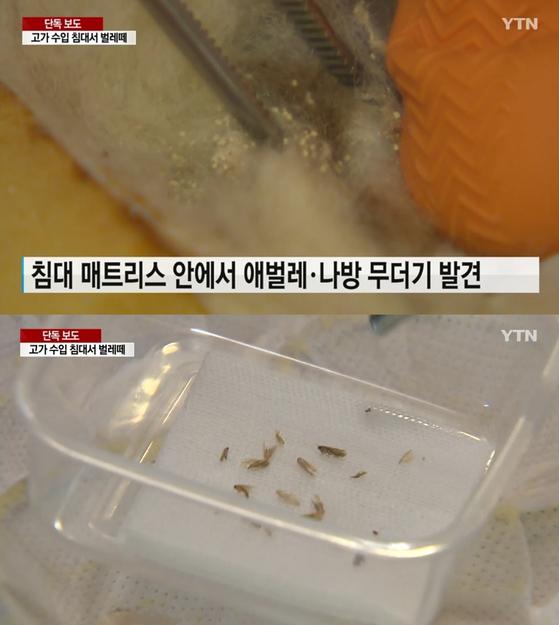 낙타 털 소재 1000만원짜리 수입 침대 매트리스에서 나방과 애벌레가 무더기로 나왔다고 27일 YTN이 보도했다. [사진 YTN]