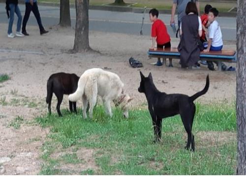 지난해 인천대공원에서 포착된 들개 무리. [인천시 제공=연합뉴스]