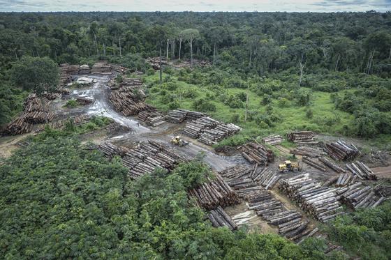 브라질 호라이마 주에서 진행되는 아마존 열대우림 불법 벌목. 브라질 환경연구소인 이바마(Ibama)가 촬영한 사진이다. [AP=연합뉴스]
