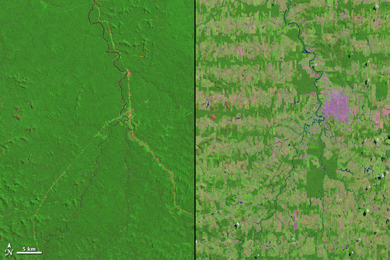 브라질 혼도니아의 열대우림 벌목. 왼쪽은 벌목 전, 오른쪽은 벌목 후 모습. [중앙포토]