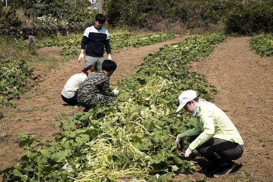 제주도 서귀포시 모슬포 인근에 위치한 밭에서 도하리와 조합 멤버들이 잡초뽑기 작업을 하고 있다. 장진영 기자