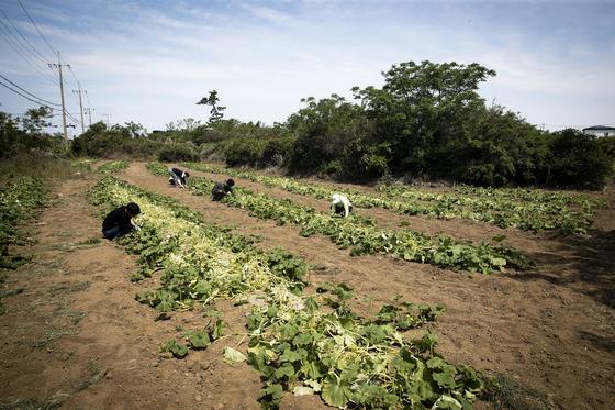 협동조합의 청년들은 잡초가 무성한 밭을 '아기밭'을 만들어 씨를 뿌렸다. 장진영 기자