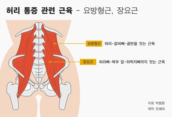 허리 통증에 관련된 근육인 요방형근과 장요근. [자료 박용환, 제작 조혜미]