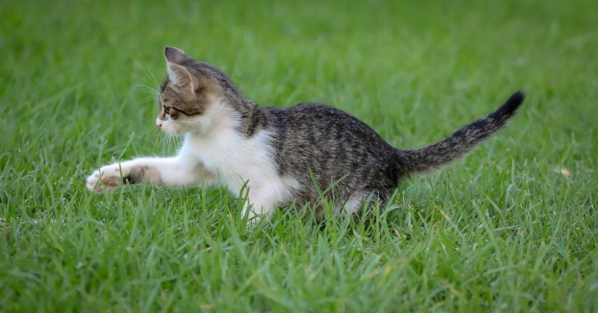 미국 뉴욕주가 고양이 발톱을 제거하는 수술을 법으로 금지할 계획이다. [사진 픽사베이]