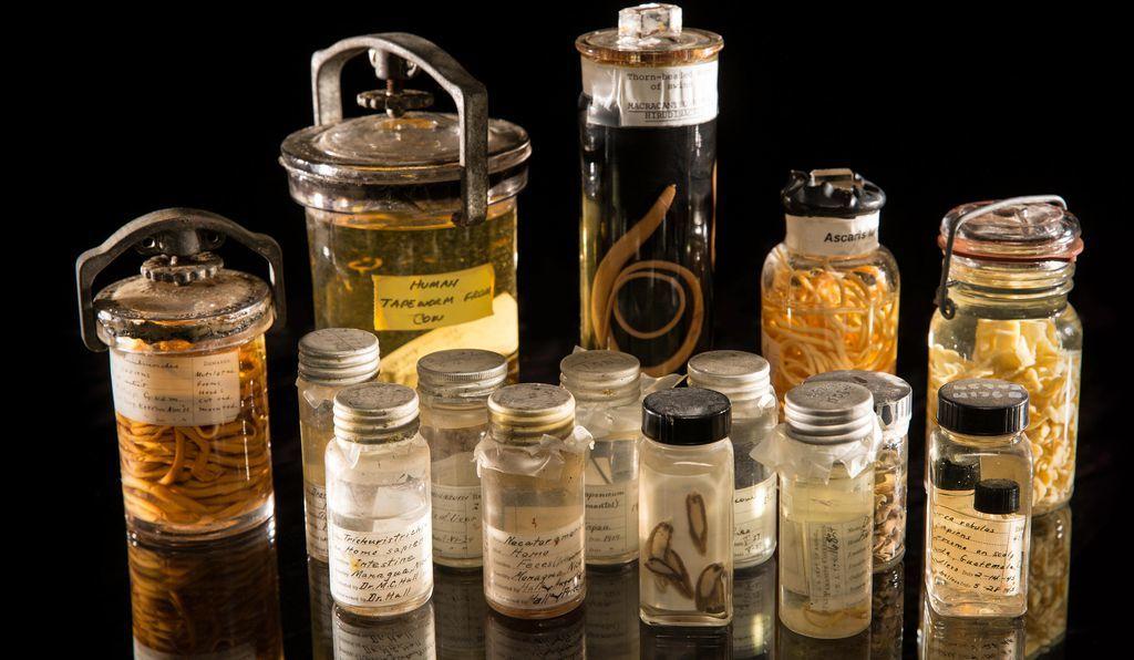 미국 스미소니언 자연사박물관이 소장하고 있는 의 기생충 컬렉션 중 일부. [사진 스미소니언]