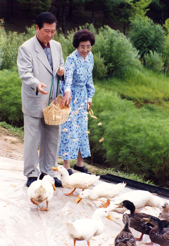 1999년 8월 김대중 대통령과 부인 이희호 여사가 청남대에서 오리밥을 주고 있다. [중앙포토]