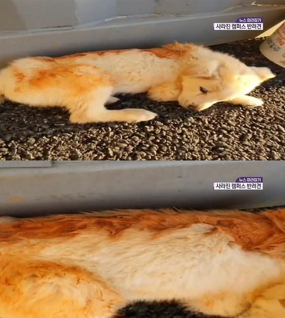 생후 2개월 강아지 등에 페인트칠…그곳엔 심각한 화상 자국