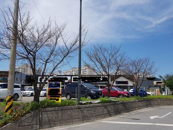 강원도 원주시 행구동 한 사거리에 볼 수 있는 가지만 앙상한 왕벚나무 3그루.[사진 원주시]