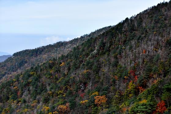 지리산 구상나무 숲. 지리산이 전국 22개 국립공원 중 생물 다양성이 가장 풍부한 것으로 조사됐다. [중앙포토]