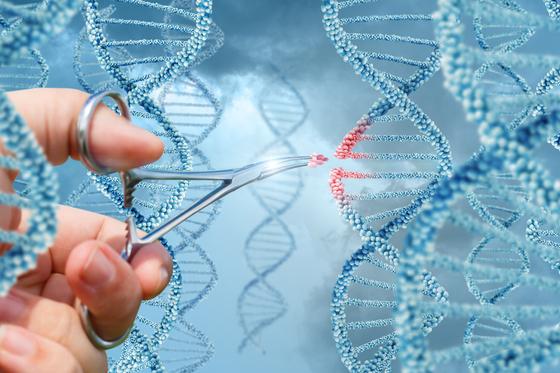 기존 크리스퍼 유전자 가위 기술은 문제가 되는 DNA 염기서열 중 일부를 잘라내 교체하는 방식으로 유전체를 교정했다. 그러나 돌연변이가 발생하는 등 한계가 있어왔다. [연합뉴스]