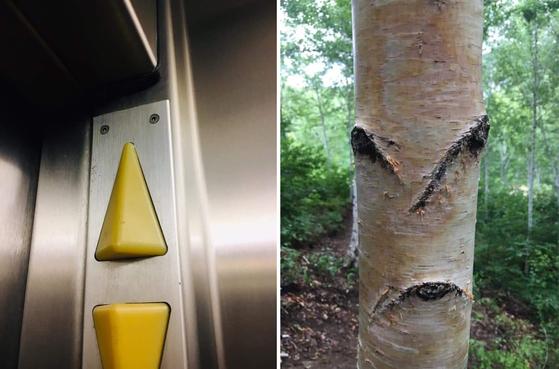 평범하게 항상 거기 있던 엘리베이터 버튼과 자작나무도 '얼굴'이라 생각하고 다시 보면 '얼굴'이 먼저 보인다. 박 부사장이 행복의 비결이라고 밝힌 의미부여의 힘이다. [사진 박은서]