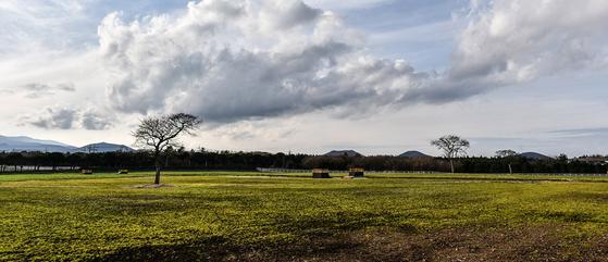 제주 삼다수숲길 근처에 있는 제주 삼다수공장의 초원. [사진 제주관광공사]