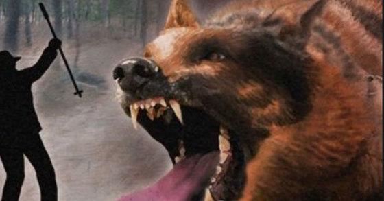목줄 묶여있던 개가 사람을 많이 공격하는 이유