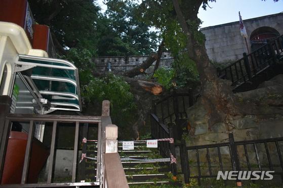 18일 사적 제118호인 경남 진주성내 호국사 앞 광장에 서 있던 600년된 느티나무가 쓰러져 계단을 가로막고 있다. [뉴시스]