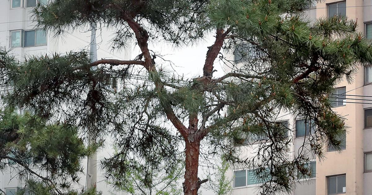도심의 나무. [연합뉴스]