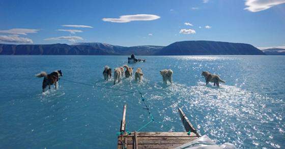 그린란드 얼음물 속을 달리는 썰매개. [스테판 올센 트위터=연합뉴스]