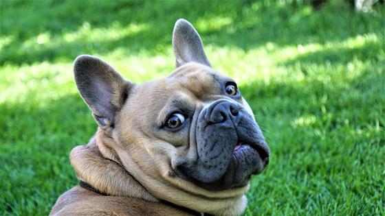 개는 품종에 따라 습성이나 기질이 다르고 성장환경에 따라 성품이 다르게 형성될 수 있다. [사진 pixabay]